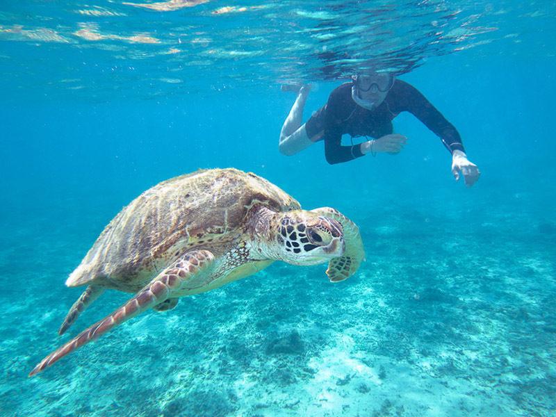 nadar-tortugas